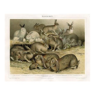 Rabbits, Rabbits and More Rabbits, Late 1800s Lithograph For Sale