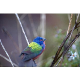KLEMENS GASSER / THERE WILL BE PAINTED BUNTINGS WITHOUT YOU 20151201 4:19 PM, 2015 For Sale