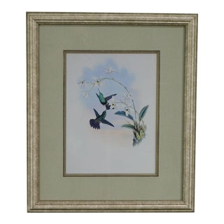 Quality Framed Print of 2 Hummingbirds For Sale