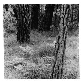 Black and White Photo Forest Scene by Garo For Sale