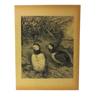 "Antique Grand Union Tea Company Print, ""The Puffins"", 1913 For Sale"