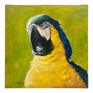 Painting of a Blue Macaw For Sale