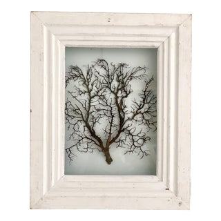 Natural Sea Fan in Shadow Box For Sale