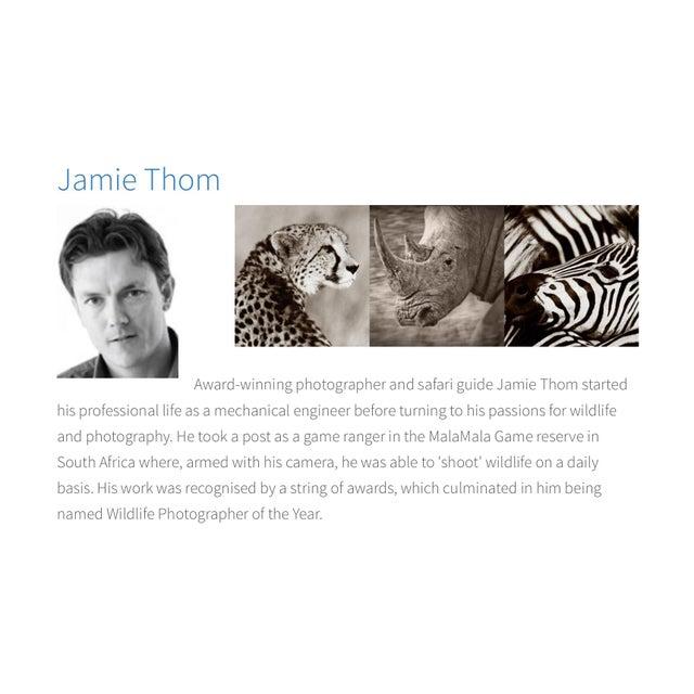 "Trowbridge ""Zebra"" Photo Triptych by Jamie Thorn Set of 3 For Sale In Atlanta - Image 6 of 7"