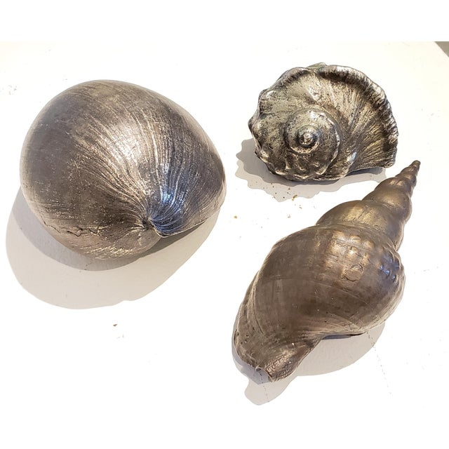 A beautiful and charming set of 3 Italian silvered bronze seashells. Each one cast from life with tremendous detail. The...