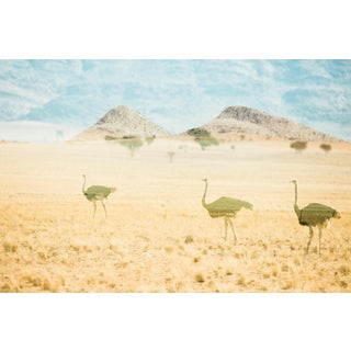 Namibia No.1 Photograph by Augustus Butera, Signed Edition of 100 For Sale