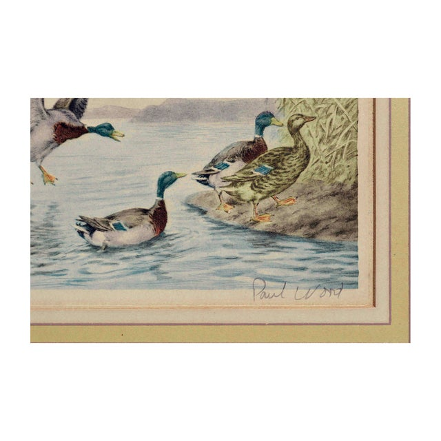 Realism Mallard Ducks Painting For Sale - Image 3 of 4
