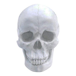 Wall Charmers White Resin Human Skull