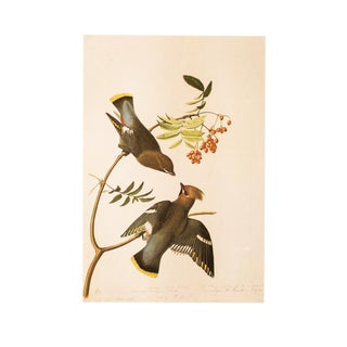 1966 Bohemian Waxwing by John James Audubon, Vintage Print For Sale