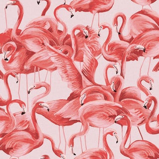 Flamingo, Cheeky Pink Wallpaper For Sale