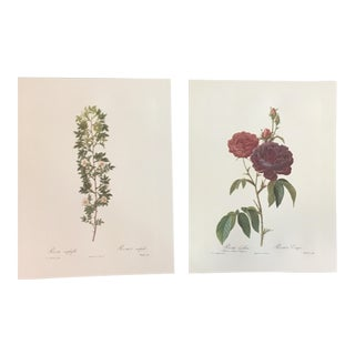 Pair of Botanical Prints After Pierre-Joseph Redouté For Sale