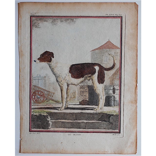 "This hand colored engraving depicts a Danish Farm Dog. It was printed c.1834 in England on handmade ""laid"" paper. Printed..."