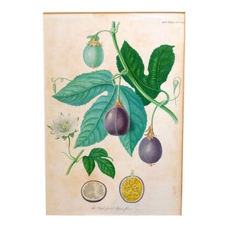 Botanical Passionfruit Plate Print For Sale