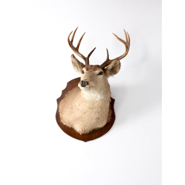 Brown Antique Deer Mount For Sale - Image 8 of 8