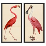Image of Pink Birds Prints- a Pair For Sale