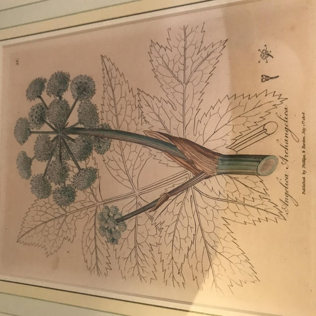 Early 19th Century Framed Botanical Engravings - a Pair For Sale - Image 5 of 13