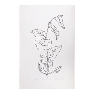 """Original Vintage 1978 Black and White Botanical """"Upright Bindweed"""" Drawing Unframed on Paper Signed Betsey Tryon For Sale"""