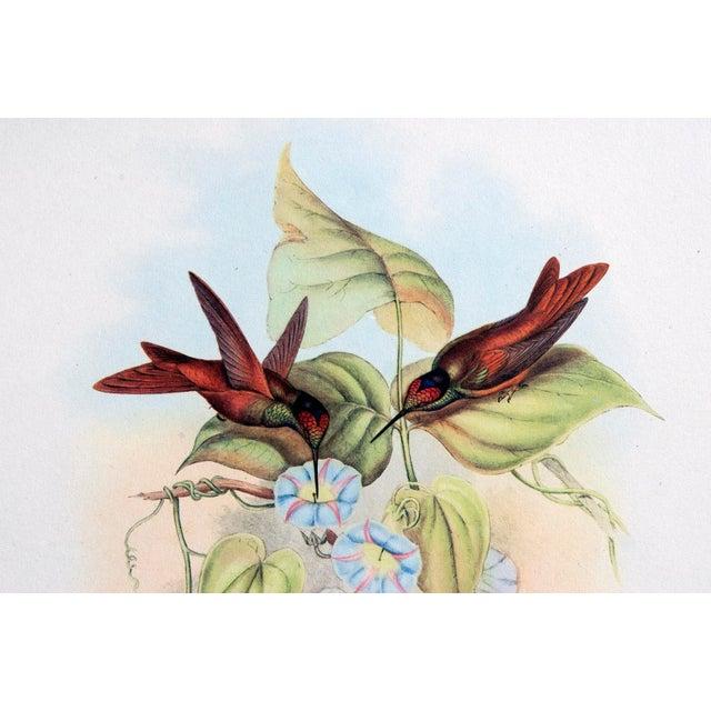 1940s John Gould Hummingbird Lithographs - Set of 6 (Marked Down to $35 Until September 15th) - Image 8 of 11