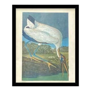 Custom Black Wood Frame of Authentic Vintage John James Audubon Wood Stork Bird & Botanical Print For Sale