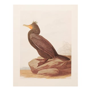 1966 Cottage Lithograph of Double-Crested Cormorant by Audubon