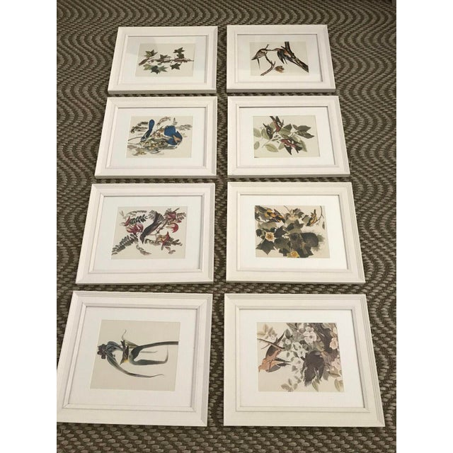 Framed Vintage Bird Prints - Set of 8 - Image 3 of 11