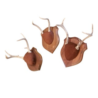 Three Antler Trophy Plaques For Sale