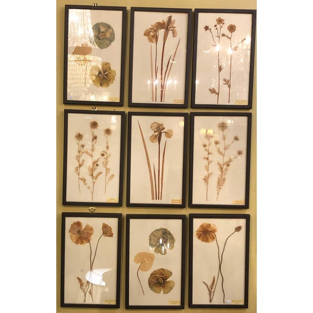 Late 20th Century Nine Finely Framed Dried Flowers Each Under Glass Framed For Sale - Image 5 of 11