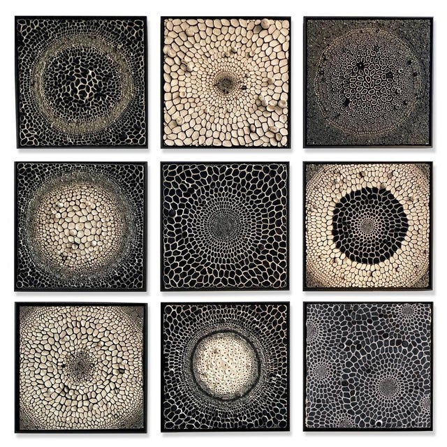 Tan Amy Genser Black and White Squares #16-25 For Sale - Image 8 of 8