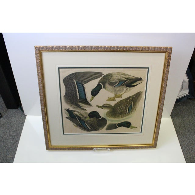 Mid 20th Century Japanese Mallards Print in Gilt Frame For Sale - Image 5 of 7