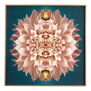"""""""No. 131"""" Contemporary Botanical Limited Edition Photograph by Erin Derby, Framed For Sale"""