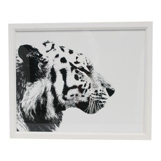 English Black and White Tiger Cat Animal Photo Print With White Frame For Sale