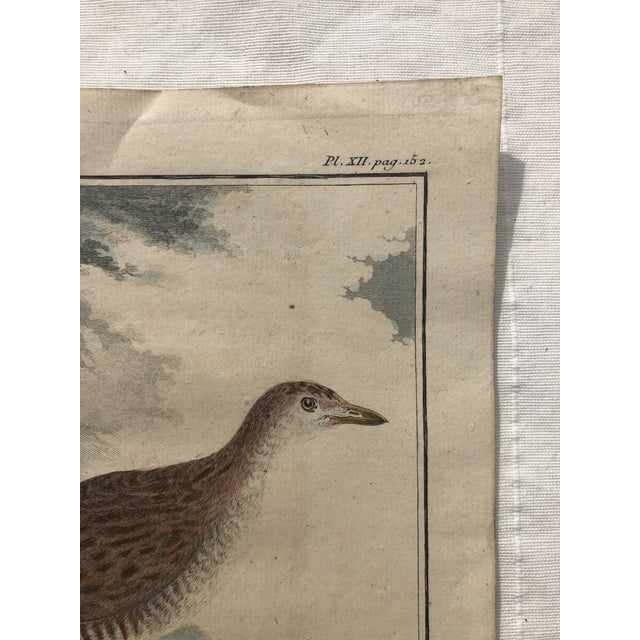 18th Century French Bird Engraving Signed by Jacques De Sève Featuring a Rale De Terre For Sale - Image 10 of 13