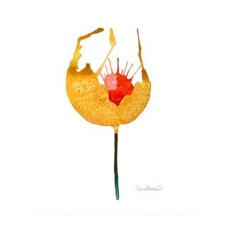 Premium Giclee Print Of Botanical Yellow Poppy