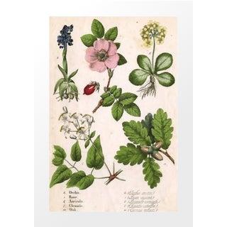 Vintage Rose Botanical Archival Print