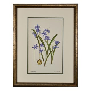 1954 Vintage English Botanical Flower Print, Framed For Sale