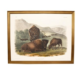 John James Audubon Buffalo Print For Sale