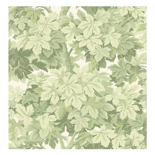 Cole & Son Great Vine Wallpaper Roll - Olive For Sale