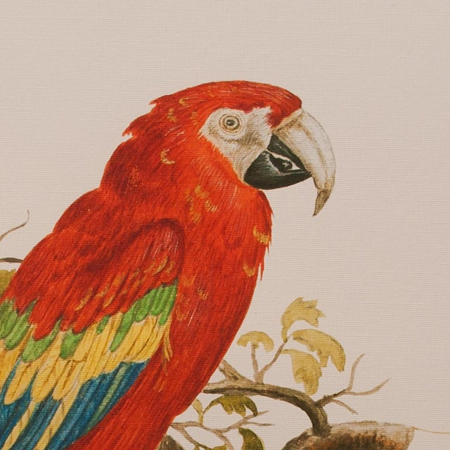 1590s Scarlet Macaw , XL Print by Anselmus De Boodt For Sale - Image 4 of 8