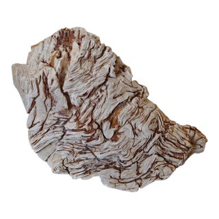 Rare Museum Quality Specimen Petrified Root Stock Sculpture For Sale