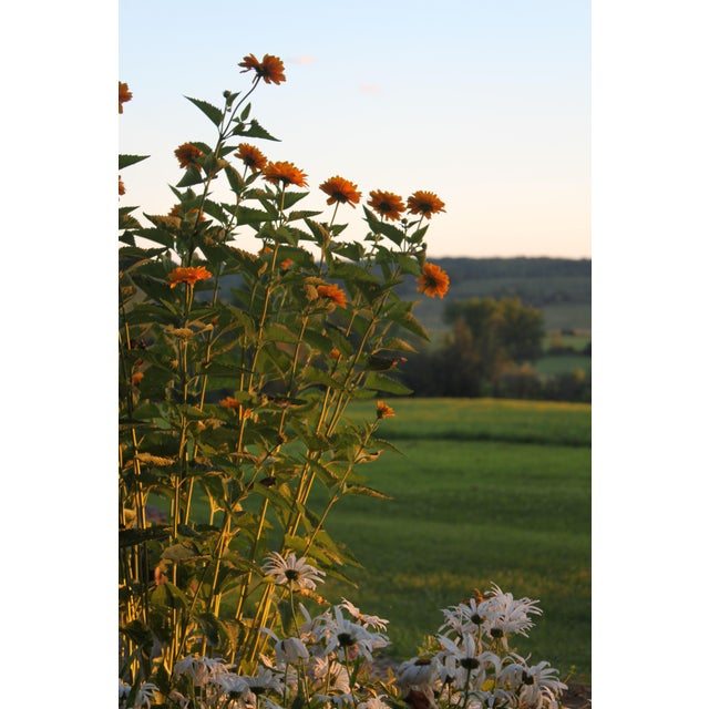 Realism Photography of Wildflowers at Sunset by Josh Moulton For Sale - Image 3 of 3