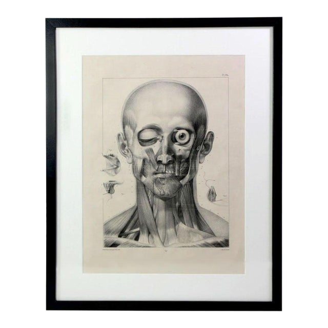 Antique 19th Century French Anatomy of Human Head Lithographic Print - Framed Under Plexiglass For Sale