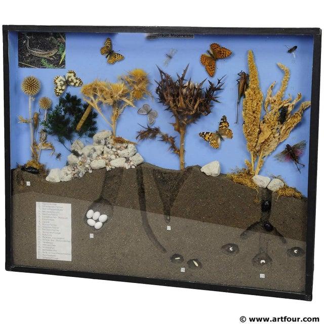 Wood School Teaching Display Of Biosphere Of Poor Grassland For Sale - Image 7 of 7