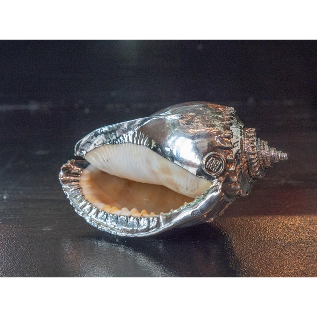 2010s Silvered Sea Shell Scotch Bonnet For Sale - Image 5 of 6
