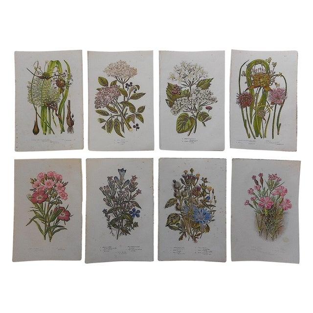 Antique Botanical Lithographs - Set of 8 - Image 1 of 3