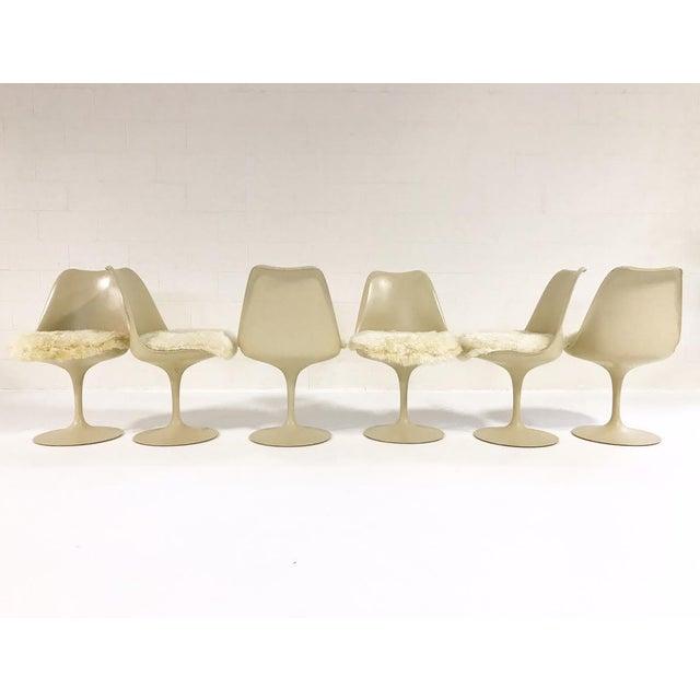 Eero Saarinen Tulip Chairs with Custom Brazilian Sheepskin Cushions - Set of 6 - Image 3 of 9