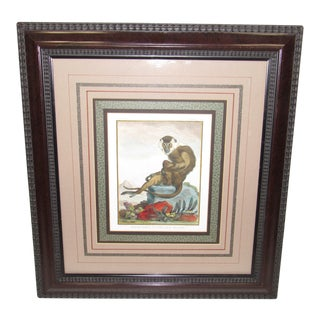 Mid 20th Century Monkey Print, Framed For Sale