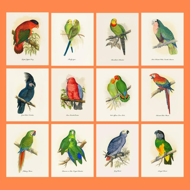 White 1884 Alexander Francis Lydon, Parrot Reproduction - Set of 12, N2 For Sale - Image 8 of 13
