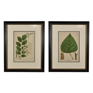 1871 Vintage Botanical Leaf Prints, Framed - Set of 2 For Sale