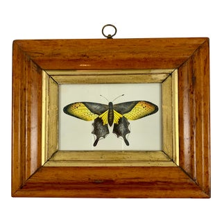 English Regency Period Original Watercolor in Fruitwood Frame - Yellow Butterfly For Sale