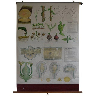 Map From the Biology Classroom: The Stem, Leaf and Flower For Sale